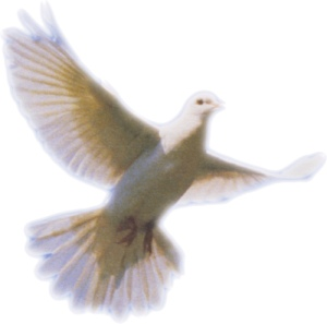 white dove image by http://www.flickr.com/photos/oddsock/